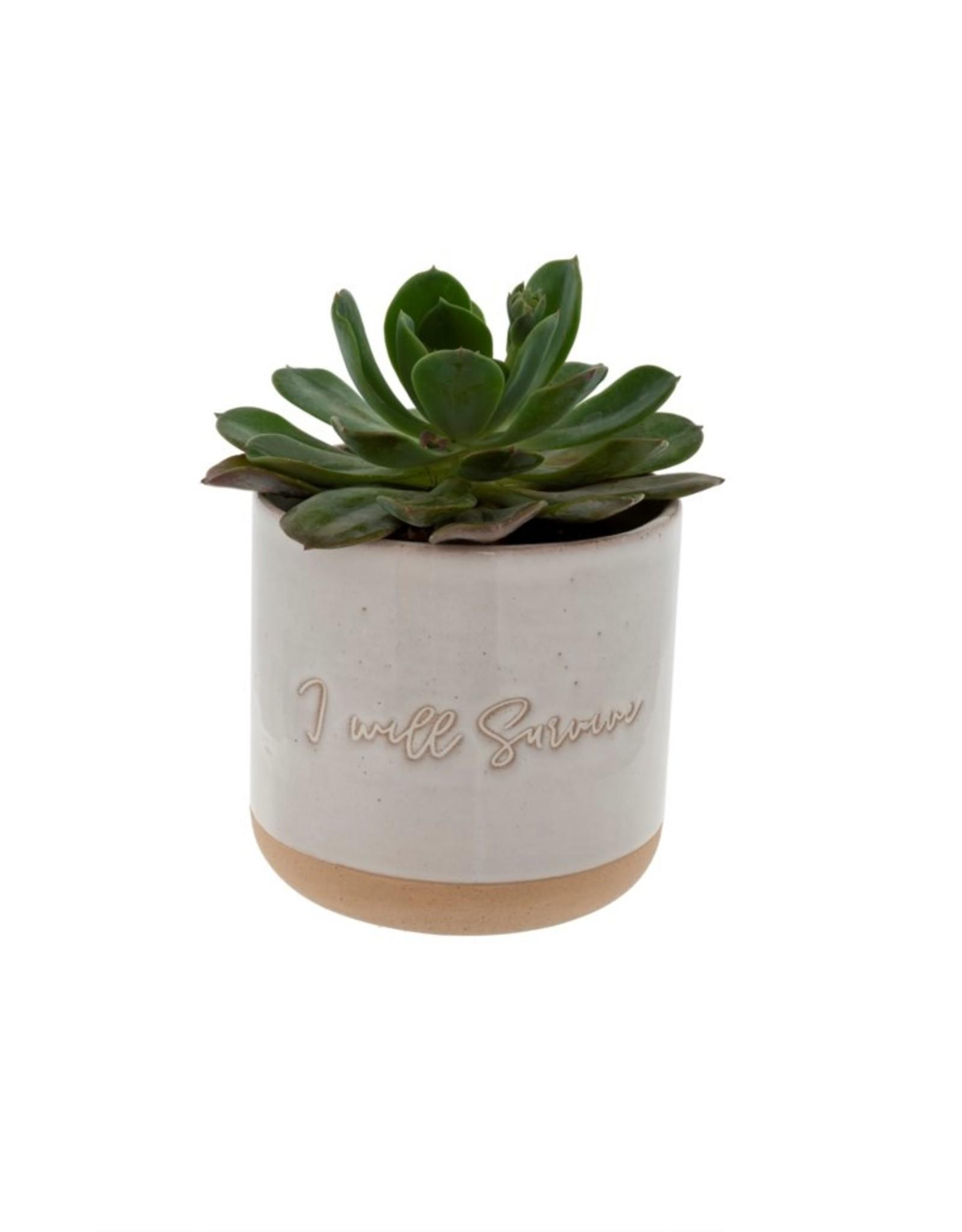 Indaba Planter Pot Indaba I Will Survive 3-9307