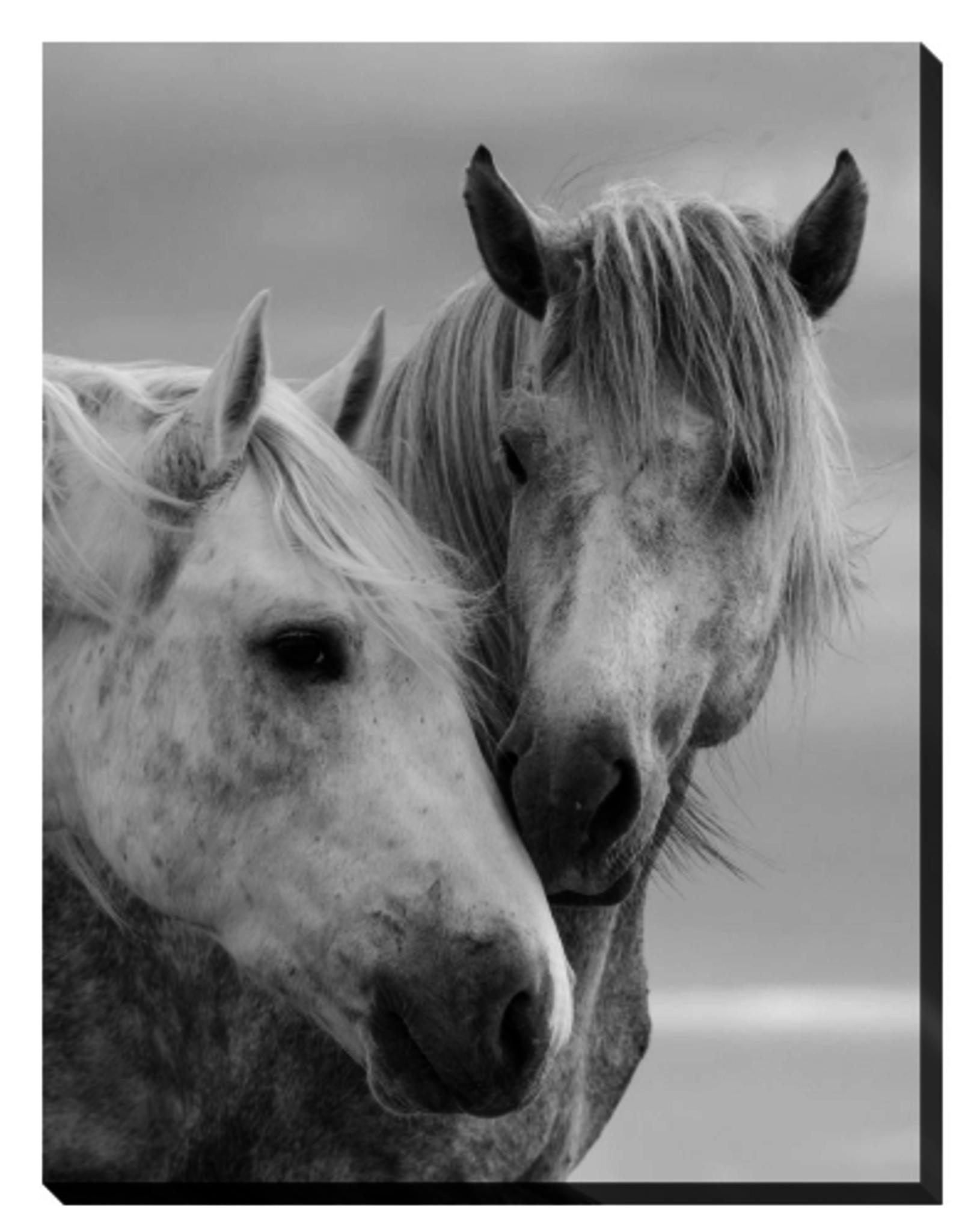 Streamline Art Horse Kisses 30 x 45