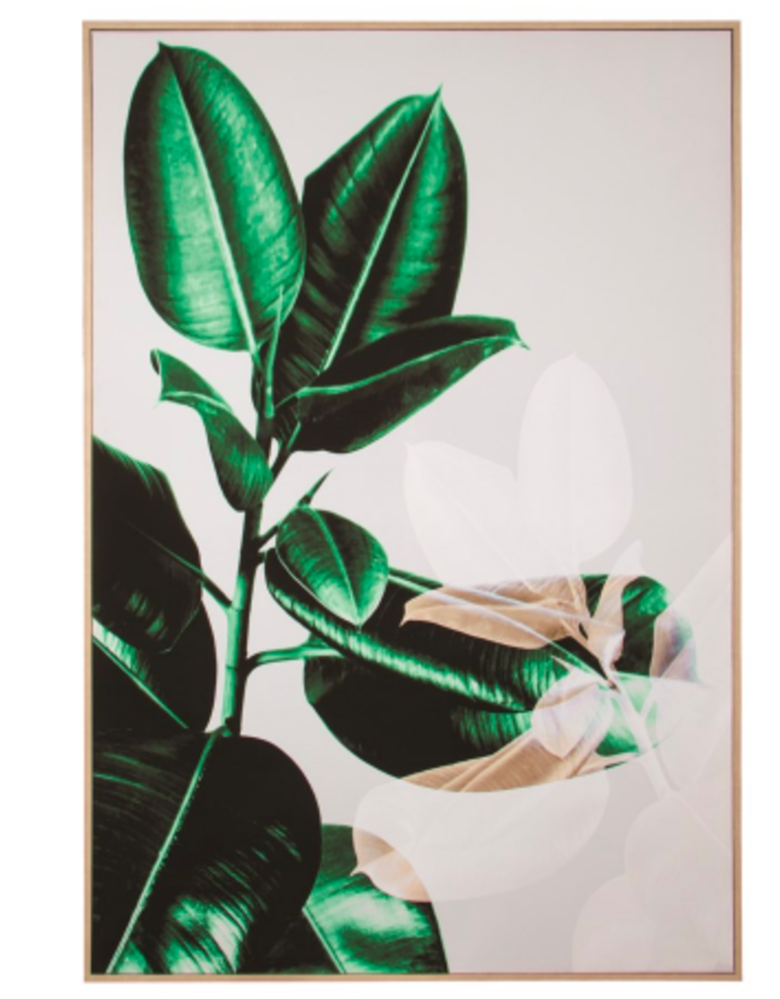 Art Canfloyd Rubber Plant N18617X