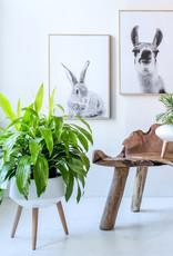Style In Form Planter SIF Circa Mood White AGW-003