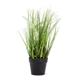 Plant Abbott Feather Grass In Pot 27-SAVANNAH-003