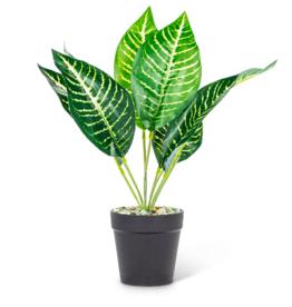 Plant Abbott Leaf Medium 27-BOTANY-018-01