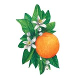 Hester & Cook Orange Blossom Table Accent - pack of 12