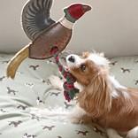 Sophie Allport Rope Dog Toy Pheasant