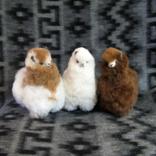 Peruvian Link Standing Alpacas 5.5