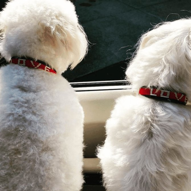 Love Project LOVE Pet Collar -Medium LOVE Pet Collar -