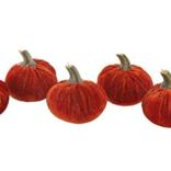 Flora Bunda S/6 Orange Velvet Pumpkins in Box