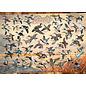 Puzzle: 1000 Ducks of North America