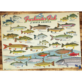 Cobble Hill Puzzle: 1000 Freshwater Fish of North America