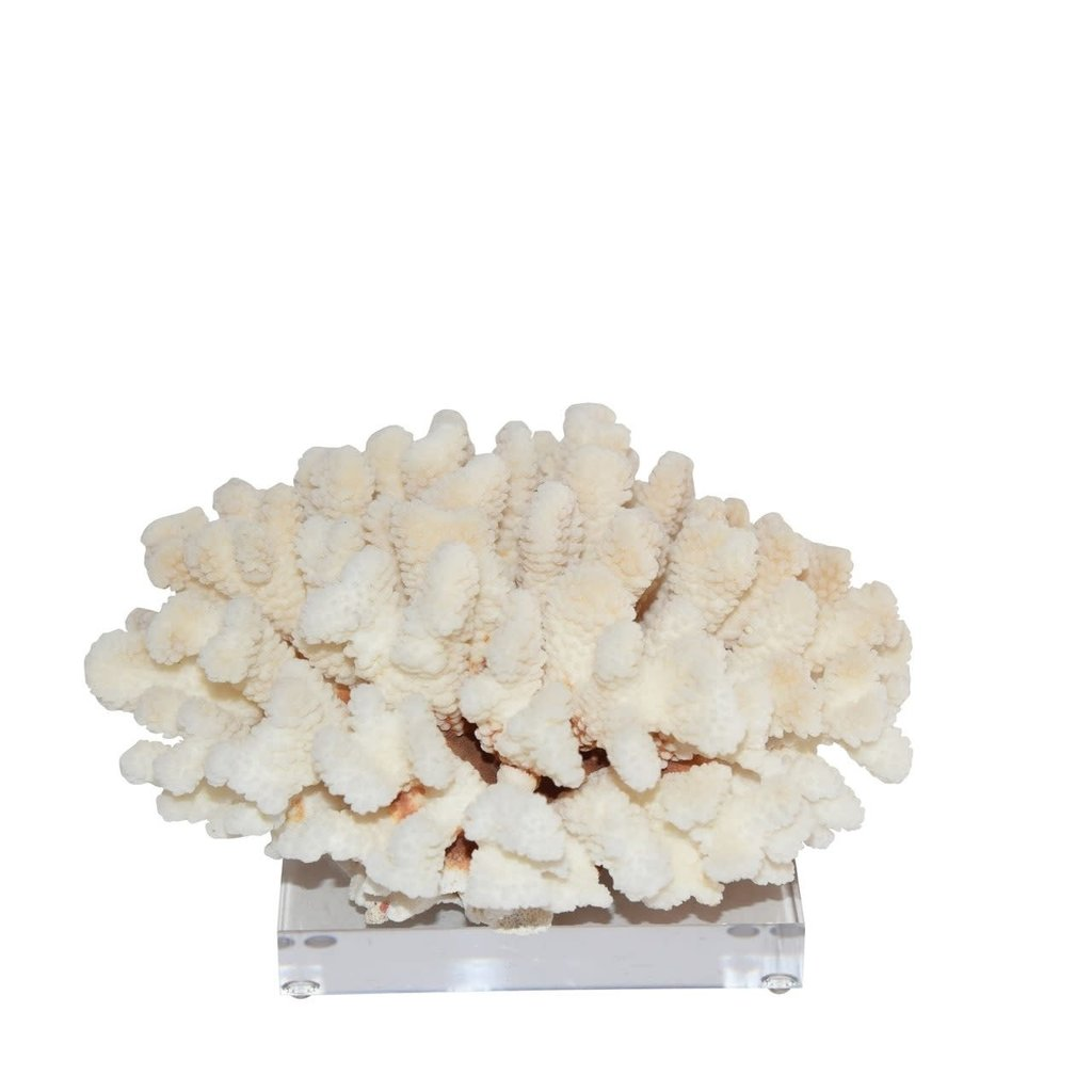 """LPM Cluster Coral 10-12"""" On Acrylic Base"""