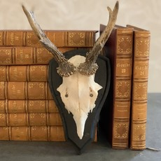 LPM Roe Deer Antlers, Black Back with Arched Top