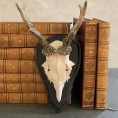 Roe Deer Antlers, Black Back with Arched Top