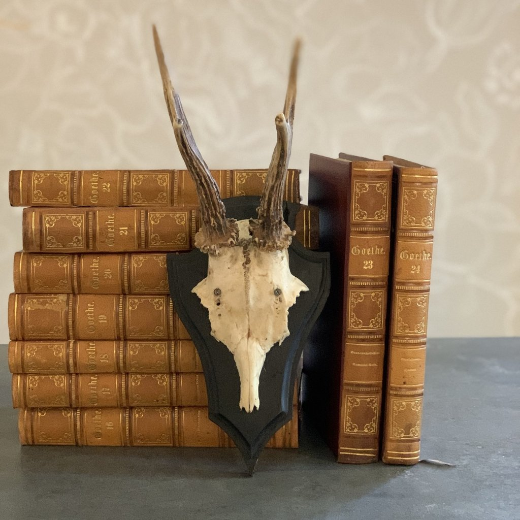 Roe Deer Antlers, Black Base with Notched Top