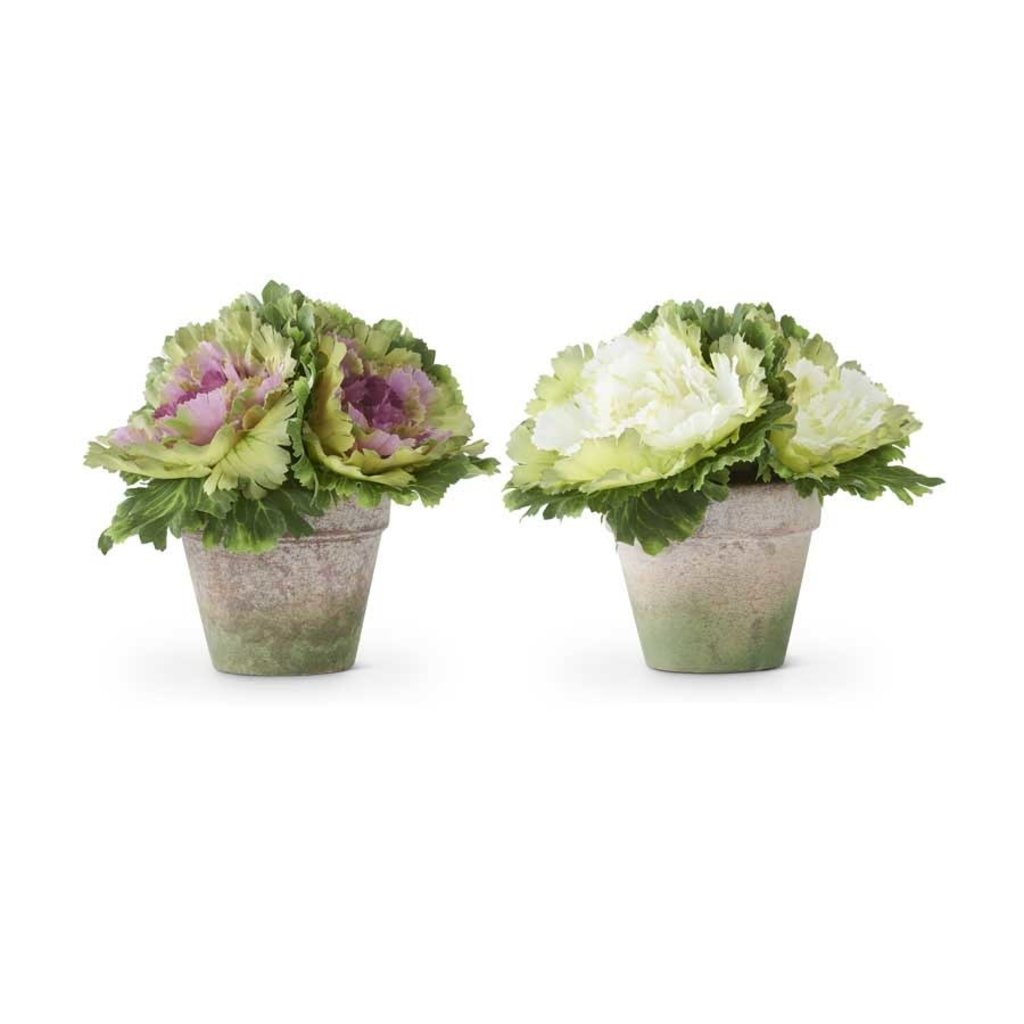 Cabbage in Pots, white and green 8""