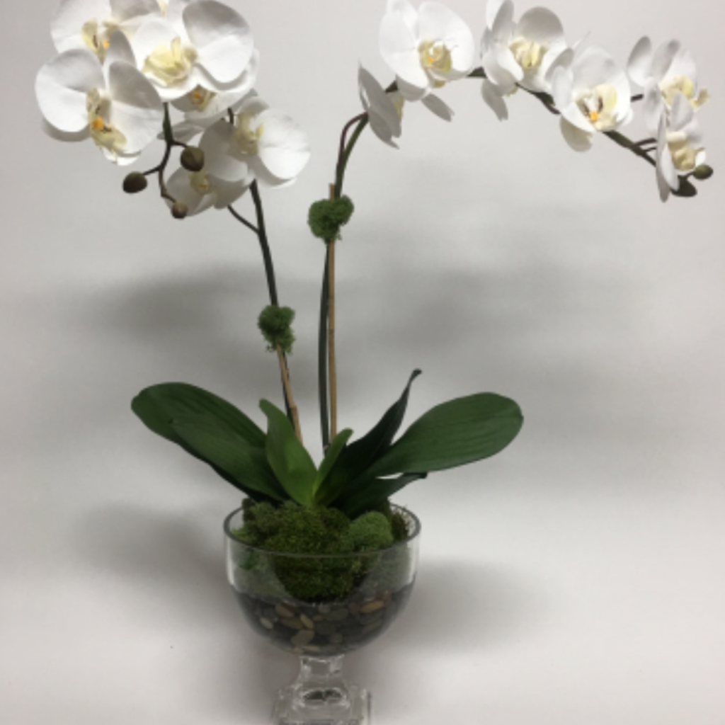 Double Orchid in Short Urn