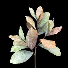 LPM Magnolia Spray - Green Brown