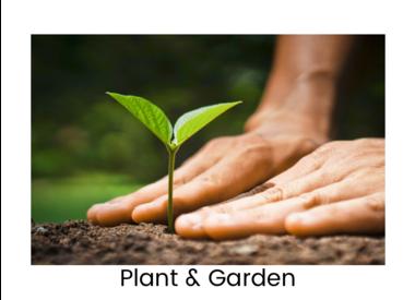 Plant & Garden