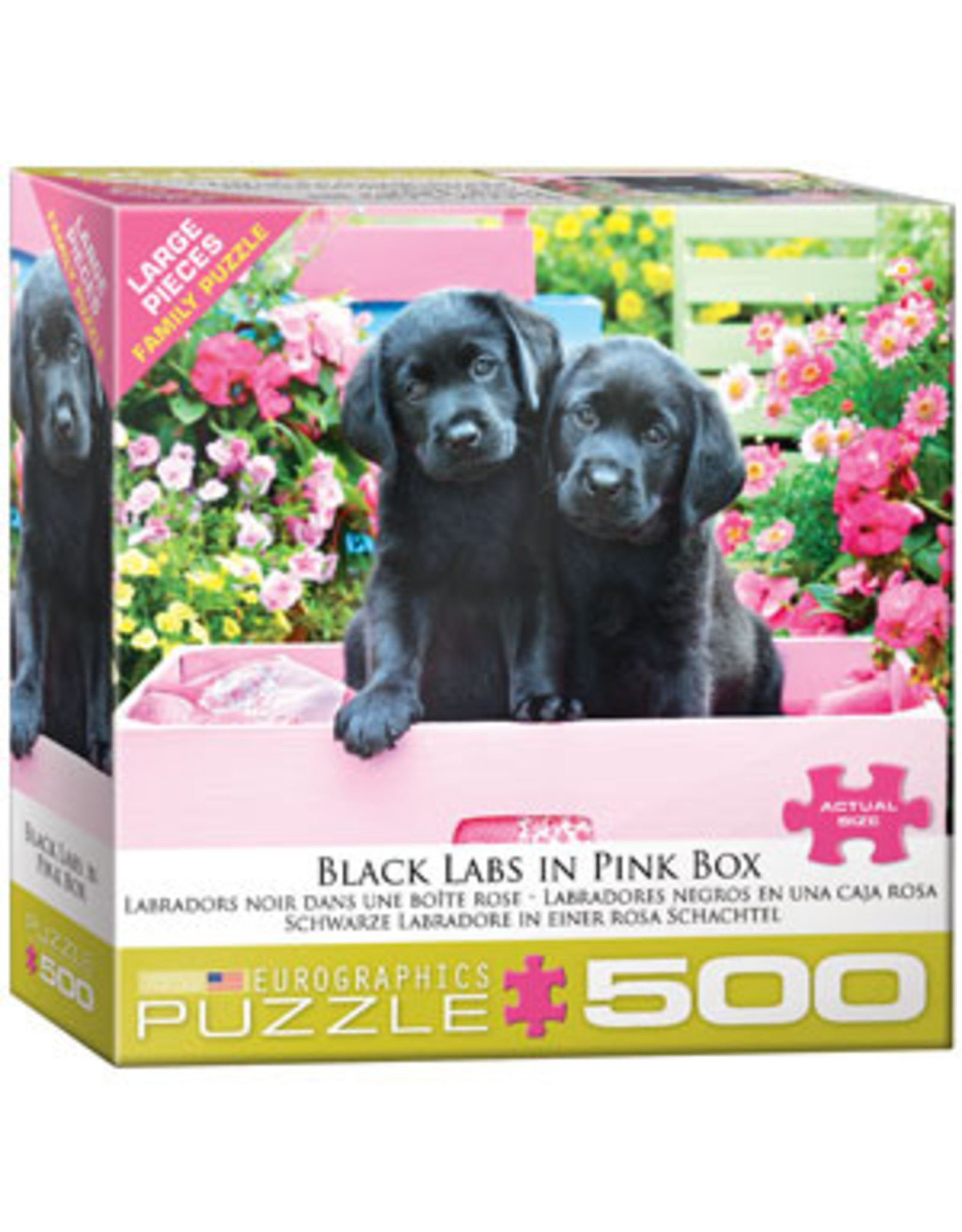 Eurographics Black Labs in Pink Box