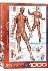 Eurographics The Muscular System