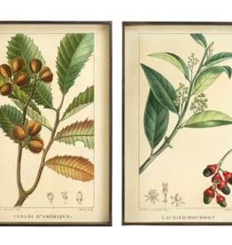 Botanical Print in Metal Frame
