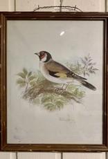 Framed Vintage Bird Prints