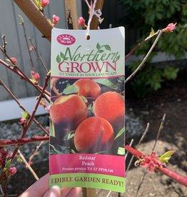 Prunus 'Redstar' Peach Tree