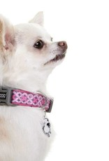DOOG Doog | Toto Collars, Leash and Harness