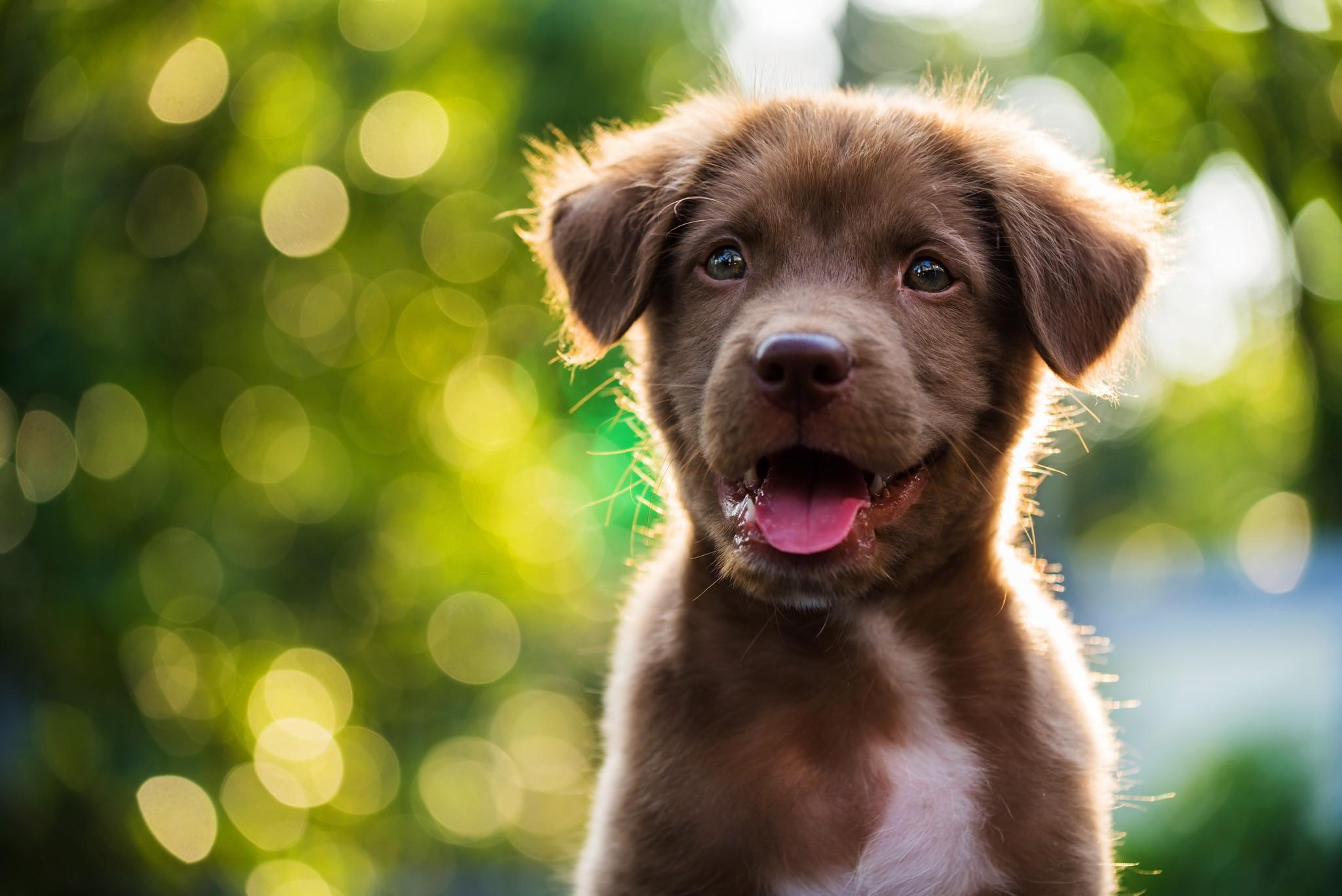 ¿Por qué mi cachorro muerde tanto? | posibles razones y soluciones