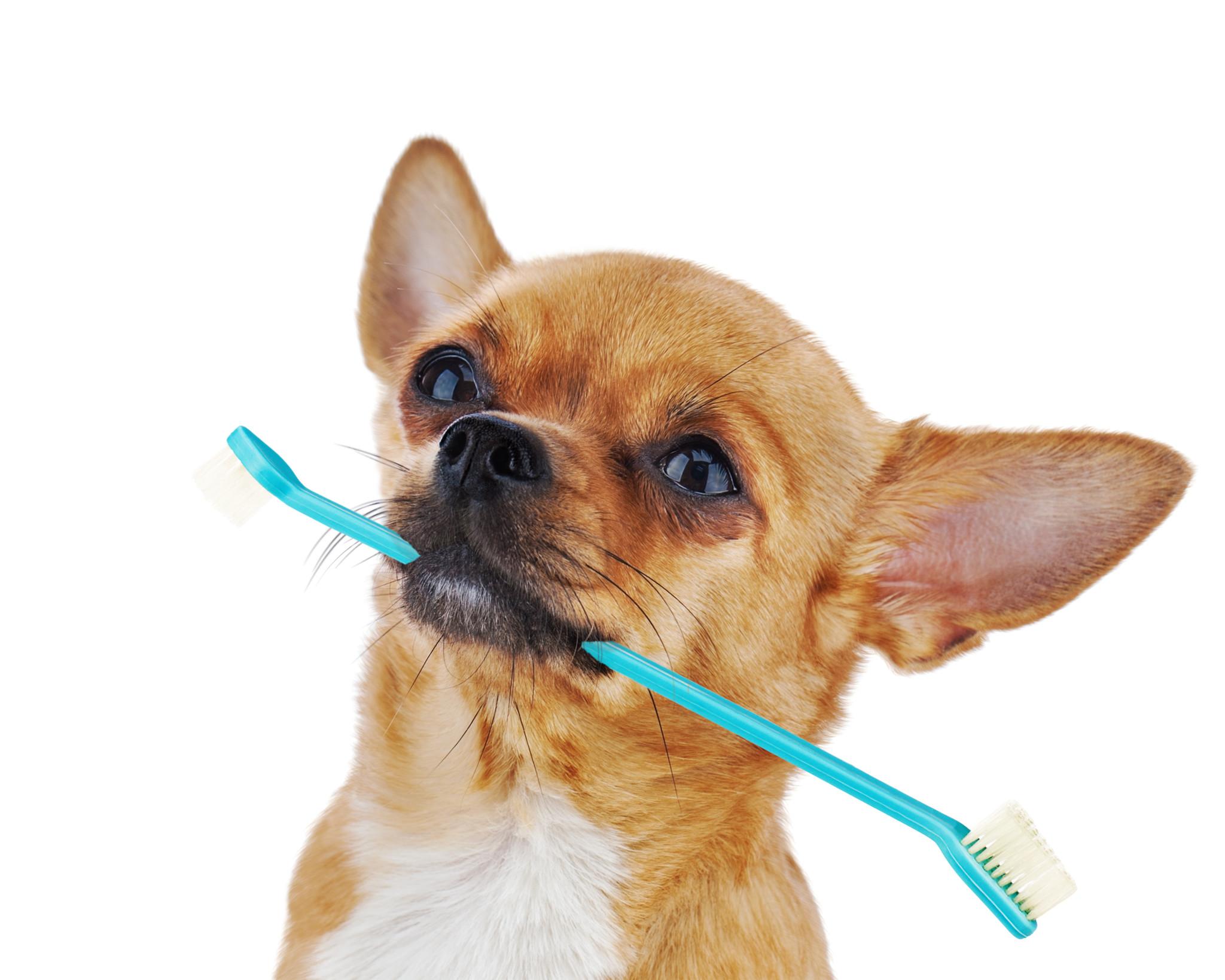 5 maneras de mantener la salud oral de tu perro saludable