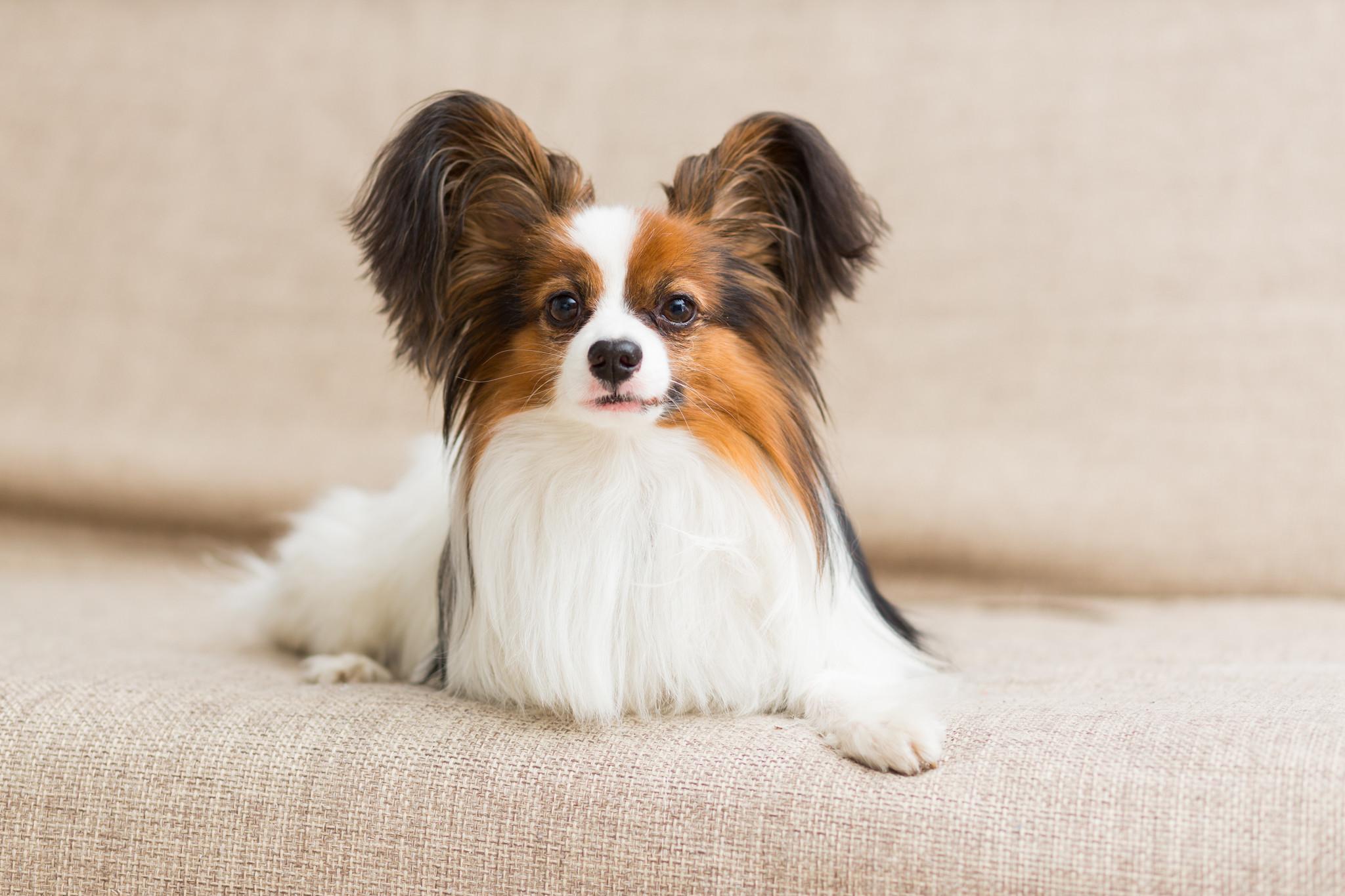 Preguntas y respuestas sobre el Grooming para perros