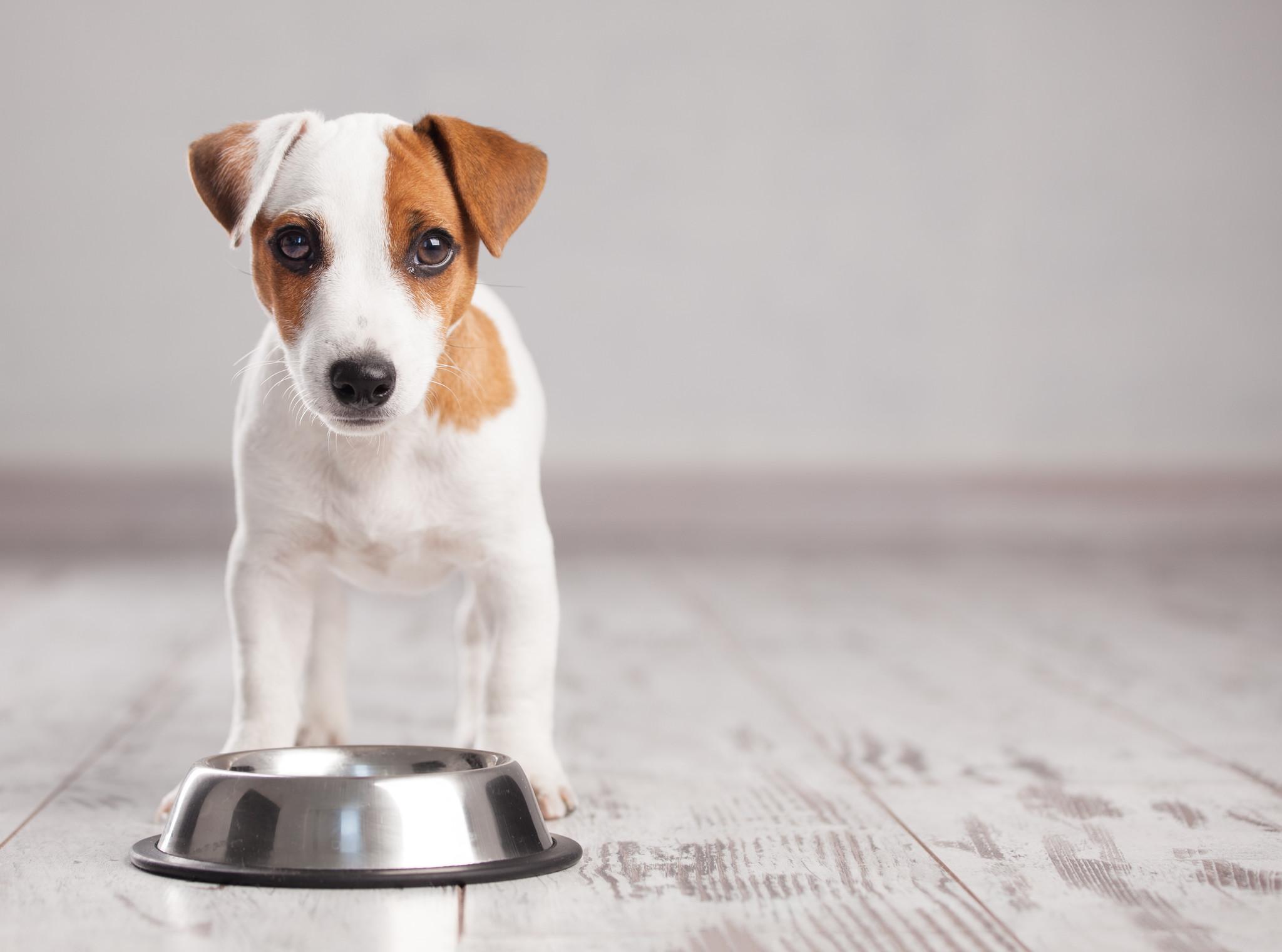 4 pasos para que tu perro se coma su comida con gusto