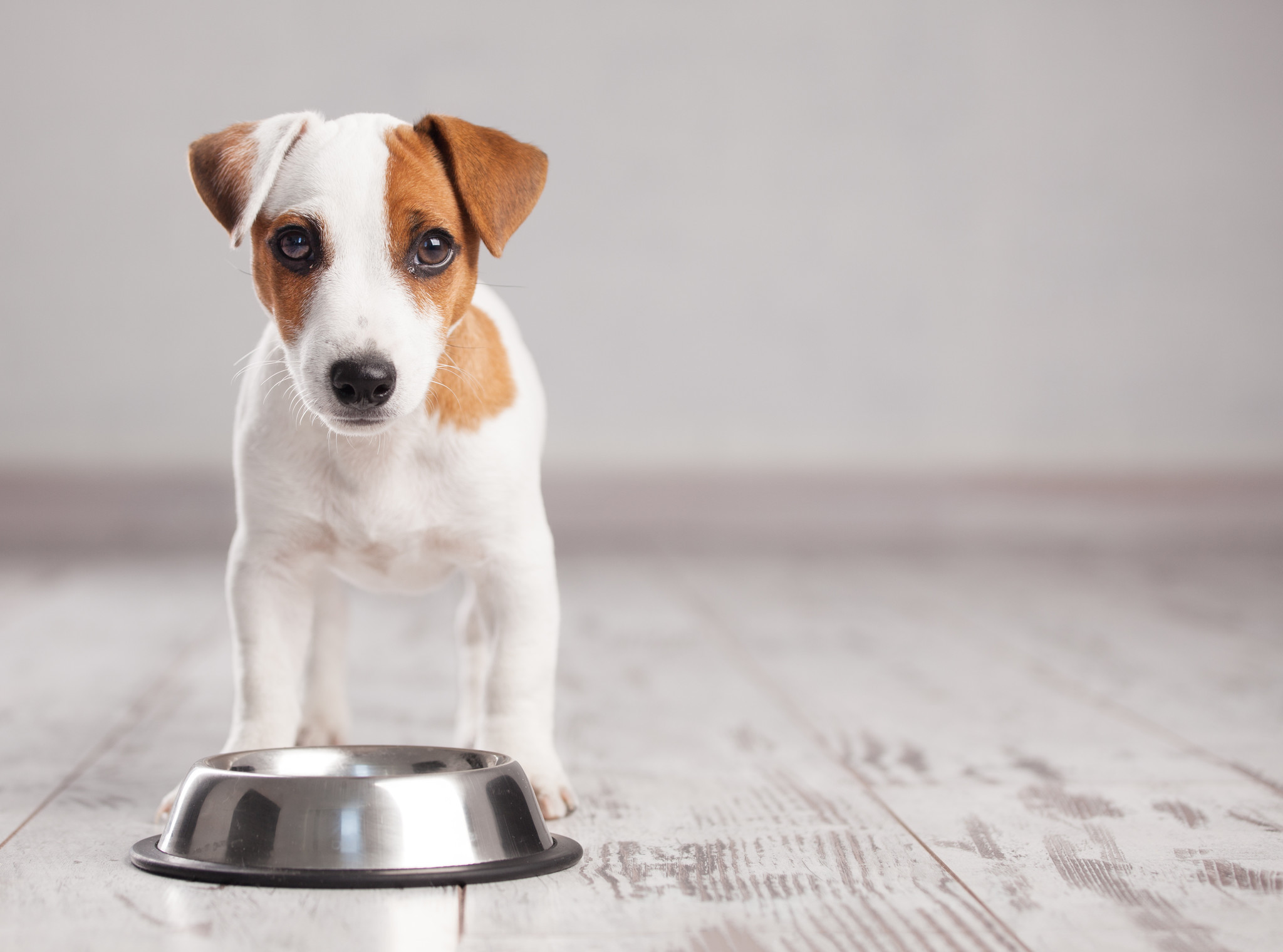 4 tips that will get your picky dog to eat