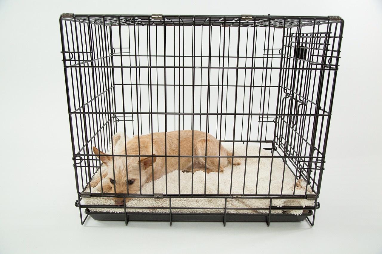 3 Beneficios de acostumbrar a tu perro a la jaula