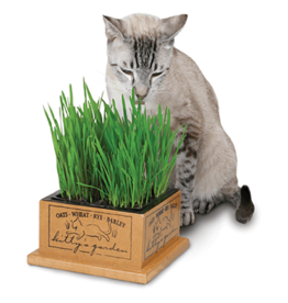Pioneer Pet Products / Smart Cat Kitty's Garden Cat Grass with Planter