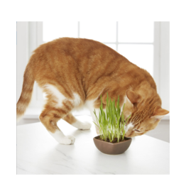 Pioneer Pet Products / Smart Cat Kitty Garden Mini Ceramic Cat Grass Kit