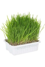 Miracle Pet CatAbout Cat Grass Plus Multi Cat Size Grass Growing Kit 150g