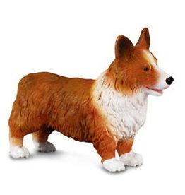 Dog: Welsh Corgi