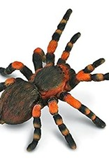 Insect: Mexican Redknee Tarantula