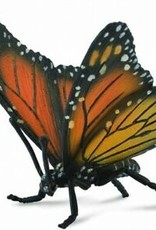 Insect: Monarch Butterfly