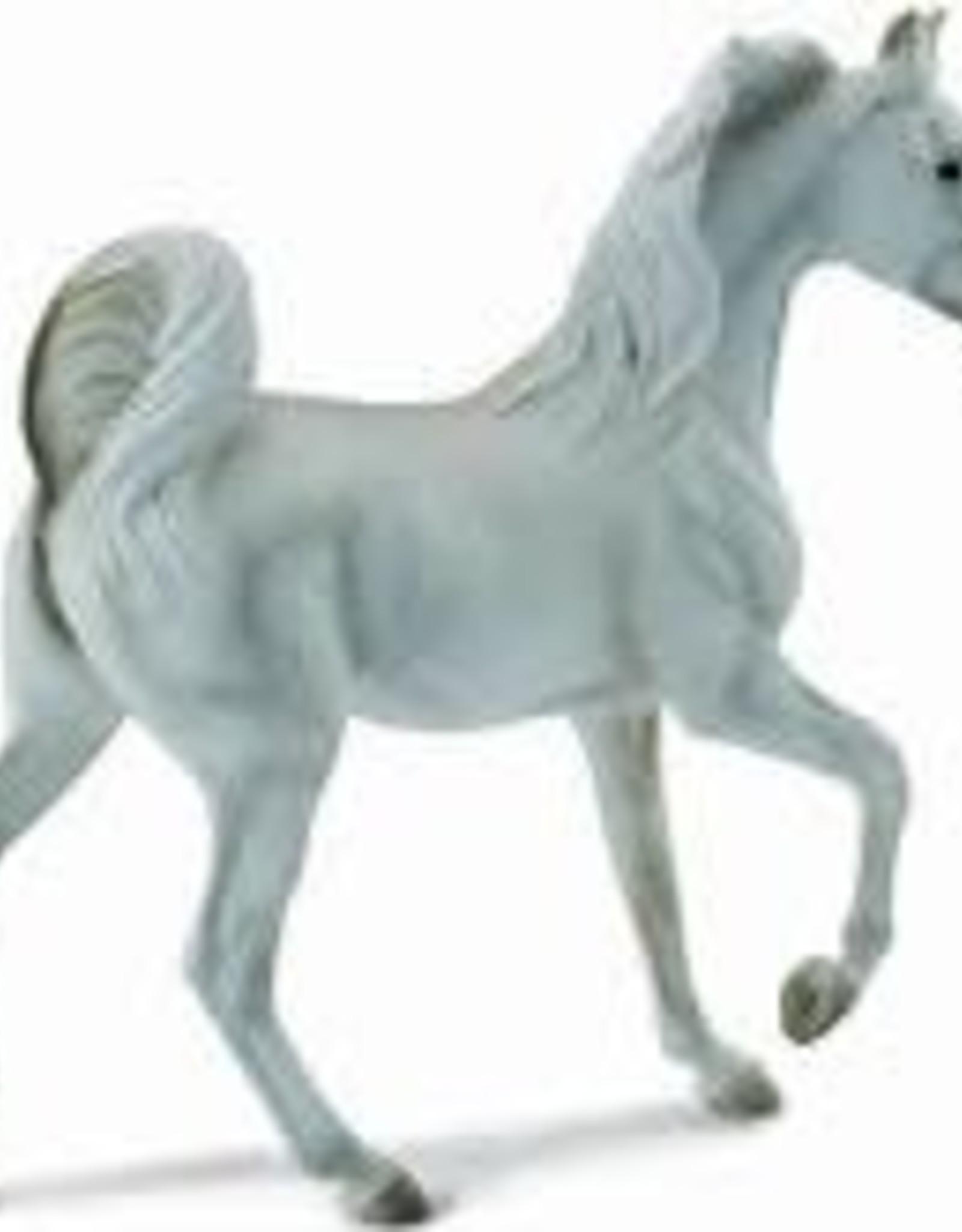 Grey Arabian Mare