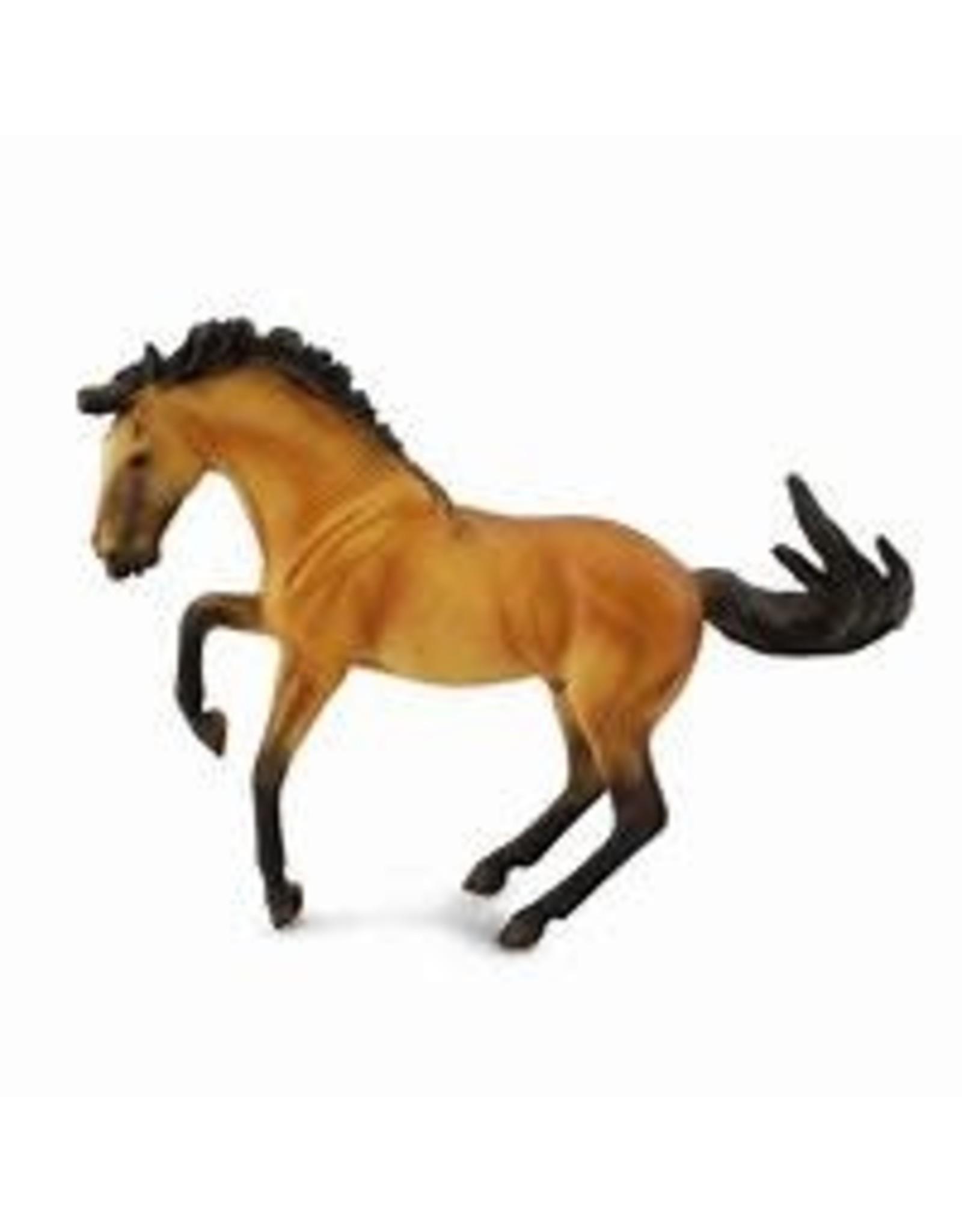 Buckskin Lusitano Stallion