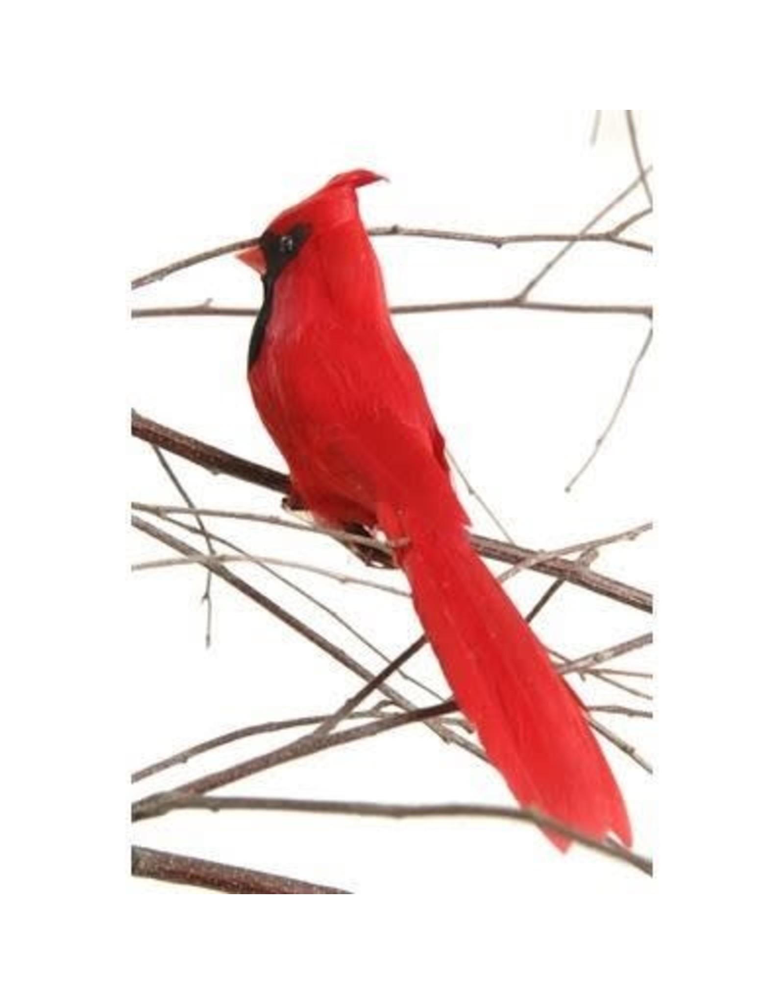 "6"" Cardinal w Clip"