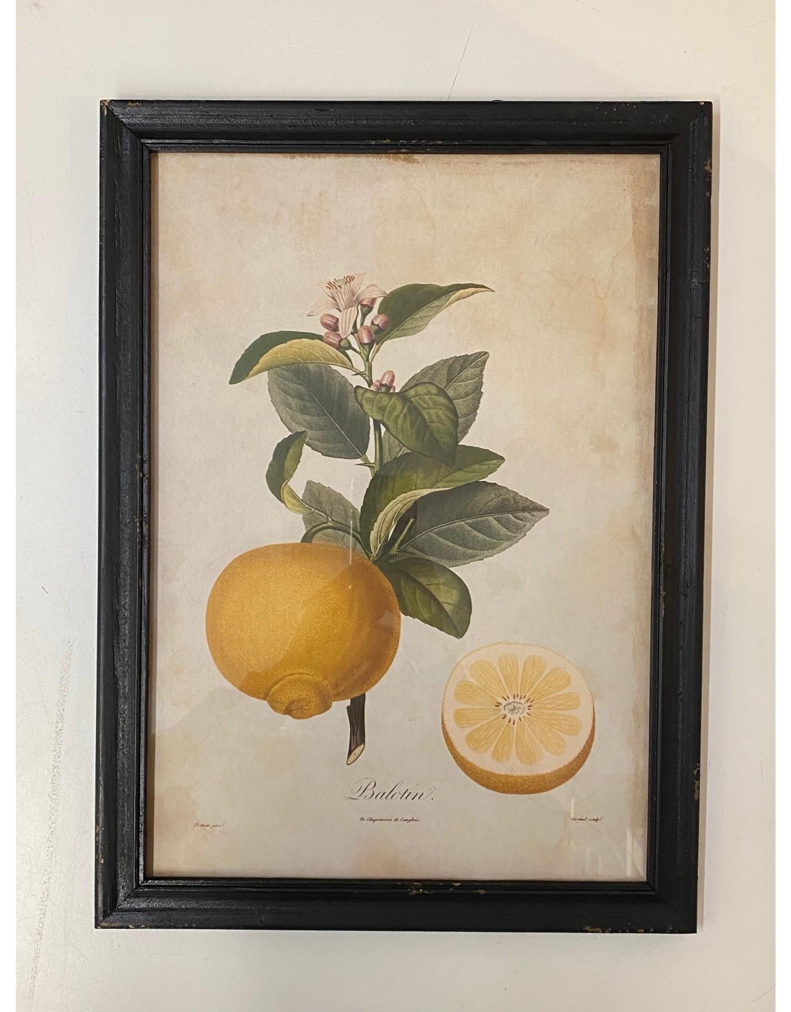 Framed Bergamont Orange Print
