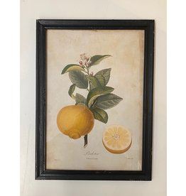 Framed Bergamont Orange Print