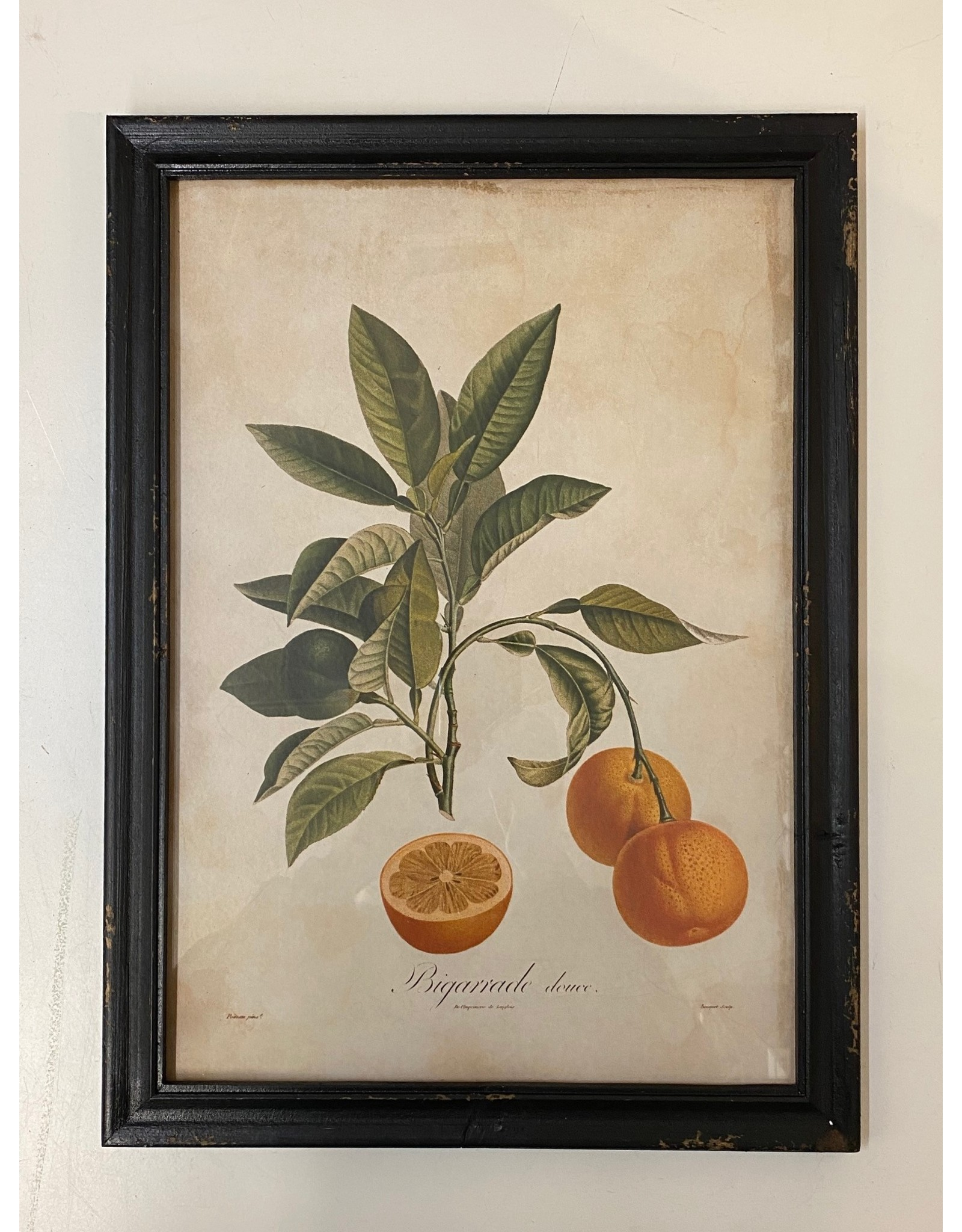 Framed Seville Orange Print