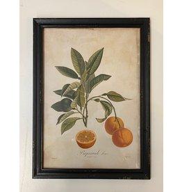 Framed Seville Orange Print