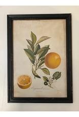Framed Valencia Orange Print