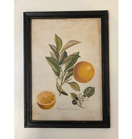 Framed Valencia Orange Print