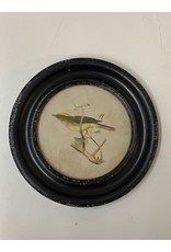 Round Framed Bird Print - 9.5""