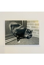 Birthday - Fat Cat